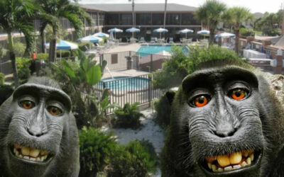 Florida timeshare company accused of monkey business by British zoo owner.